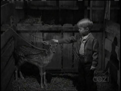Lassie - Episode #131 - The Hungry Deer - Season 4, Ep 28 - 03/16/58