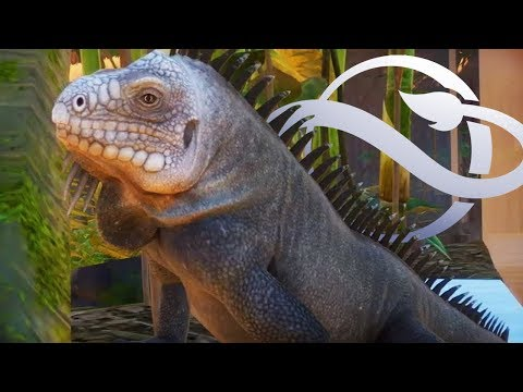 IGUANAS!! EXTENDED Gameplay Trailer Analysed | Planet Zoo Update