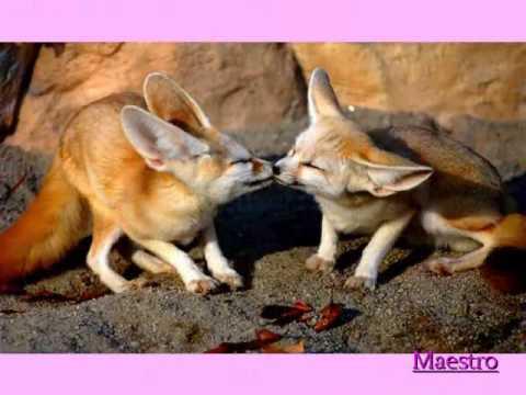 Aretha Franklin ::::: Sweet Lover.