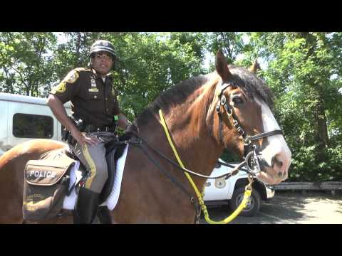 Mounted Patrol; A Day in the Life (видео)