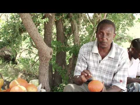 Ukuzaji wa Maboga (Promoting Pumpkin Production)