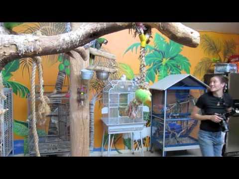 Parrot Photos