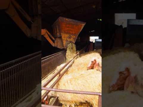Alimentación de ganado ovino