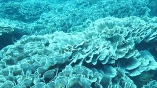 Christmas Island is the tip of an extinct volcano and emerges from the edge of the Java trench some three thousand metres deep. A narrow fringing reef surrou...