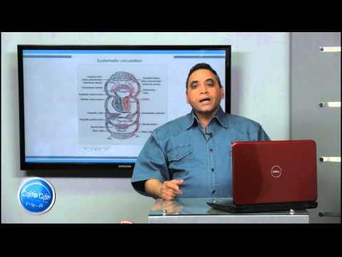 احياء لغات - الباب الثانى| Blood Pressure