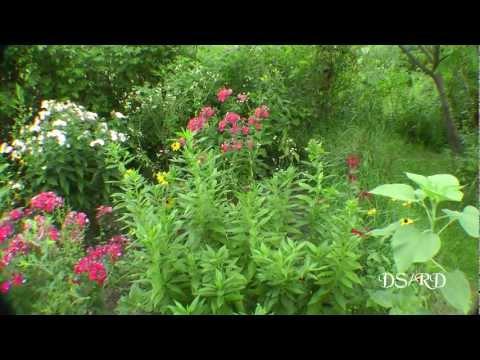 My Gardens August 6, 2012