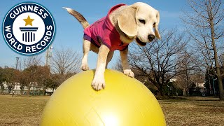 A Guinness World Record for National Puppy Day!