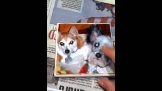 Mod Podge Photo Coasters - YouTube