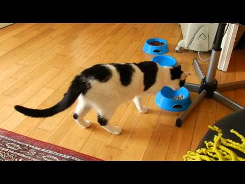 Cara the cat, playing with her toys