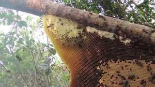 Rafter Beekeeping In NW Cambodia