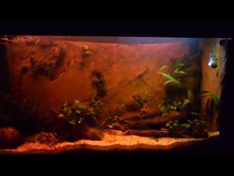 Songs in enjoy sunrise sunset and moonlight in aquarium for Sera aquarium