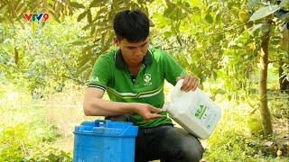 Kỹ thuật dưỡng trái sầu riêng