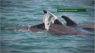 Trash Can Harm Dolphins