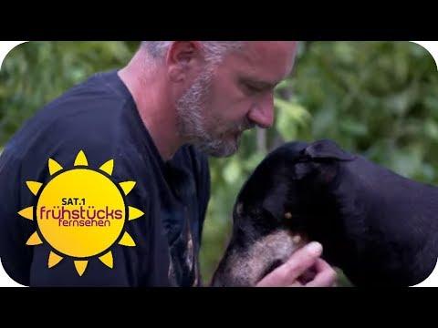 Hundemafia zockt Tierliebhaber ab: Andreas verliert Hündin nach 1 Woche | SAT.1 Frühstücksfernsehen