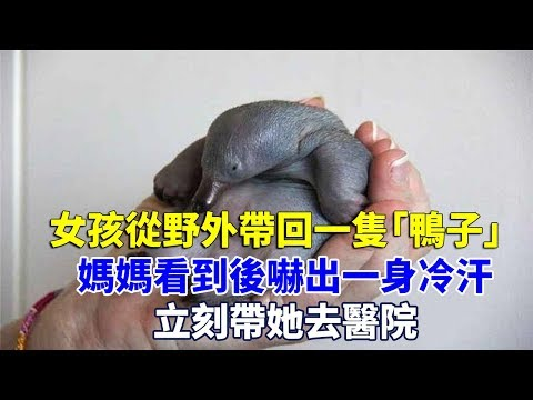 女孩從野外帶回一隻「鴨子」,媽媽看到後嚇出一身冷汗,立刻帶她去醫院