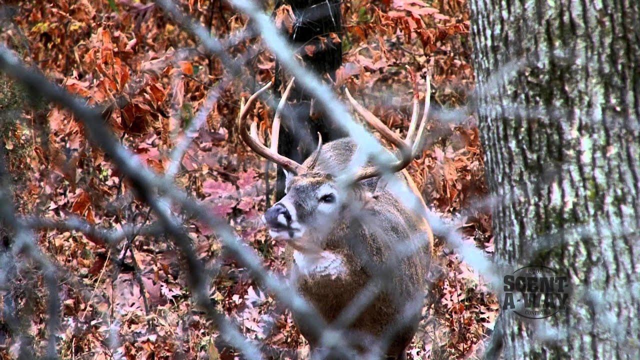 Buck video