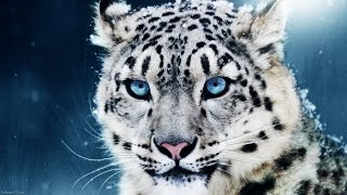 Awesome Animals HD