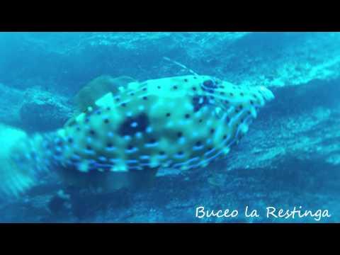 BUCEO LA RESTINGA, VIDEO DE SEPTIEMBRE / OCTUBRE