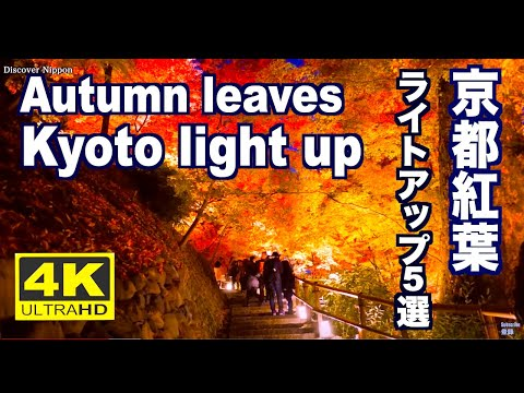 Autumn leaves in Kyoto Light Up - japan discoveries