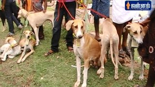 Courtallam India  city photos gallery : Amazing Dogs Show in INDIA | 'Saaral Thiruvizhaa' in Courtallam