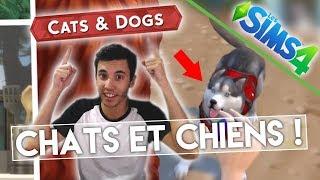 """Les amis ! L'add-on """"Chiens et Chats"""" est prévue pour Novembre 2017 ! On regarde ce qu'il y a au menu ensemble ♥ Les Sims 4..."""