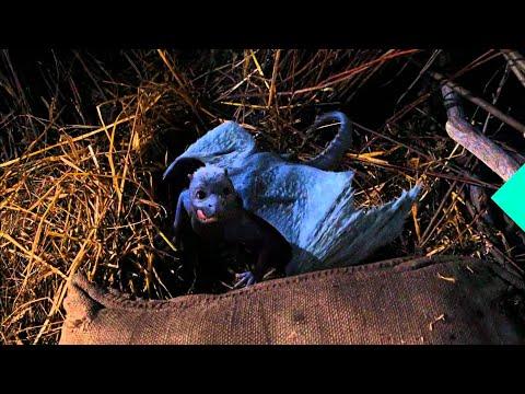 Eragon (1/5) Movie CLIP - Feeding a Dragon (2006) HD