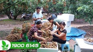 Chuyện của làng | Thách thức trong phát triển 15.000 HTX nông nghiệp hiệu quả