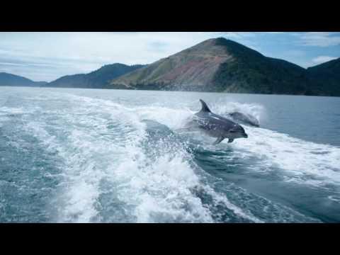 Spielende Delphine