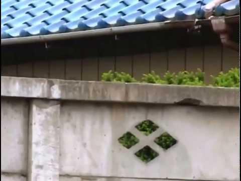 Chú Khỉ Thông Minh Phiêu Lưu Ký 14