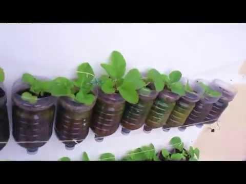come realizzare un orto verticale di successo sul proprio balcone