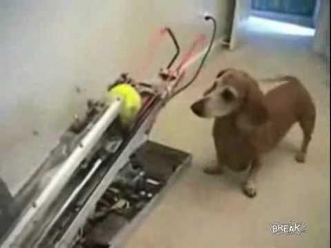 maquina lanza pelotas tenis, el perro las recoge y las lleva