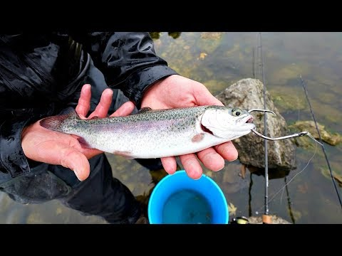 Video Bass Fishing with LIVE Trout!!! (GIANT Bites) download in MP3, 3GP, MP4, WEBM, AVI, FLV January 2017