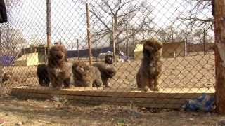 Download Lagu Mongolian Bankhar Dog Project - 2015 Campaign Video Mp3