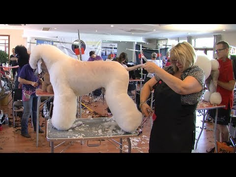 GROOMING CHAMPIONSHIP - CAMPEONATO INT PELUQUERÍA CANINA