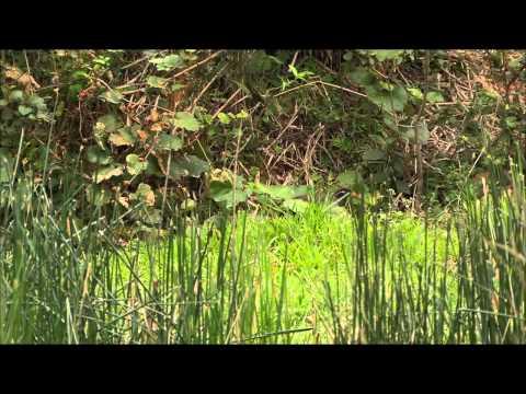 Дикая природа Японии - Тропическое побережье и страна медведей (фильм 2)