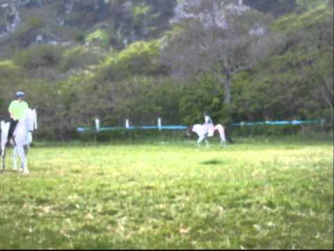 Horseback Riding Honolulu, HI 2006