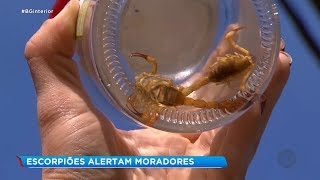 Moradores do Jardim Sandra em Sorocaba estão em alerta contra escorpiões