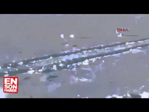 Ölü Takliti Yapan Tilki