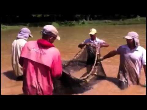 Shrimp Farming Dominican Republic – Yasica Mountain EcoCenter
