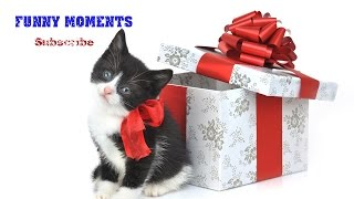 Getting a Kitten for Christmas Compilation 2014-2015 [HD]