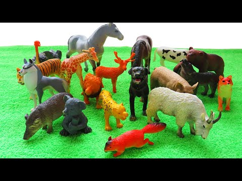 Животные для детей. Учим где живут домашние и хищные животные. Развивающий мультфильм для детей.