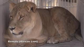 Video Eight Animals Rescued From Spirit of the Hills in Spearfish, SD MP3, 3GP, MP4, WEBM, AVI, FLV Mei 2017