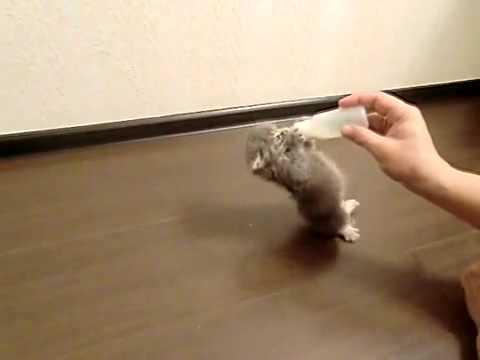 「[ネコ]お腹ペコペコの仔猫が哺乳瓶にしがみつく姿がかわいい。」のイメージ