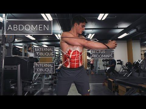 Exercise Anatomy: Abs Workout | Pietro Boselli