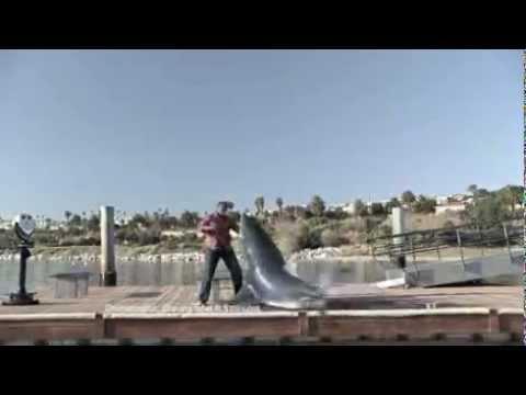 Cá mập tấn công người trên bờ – giống cá hung dữ nhất biển cả