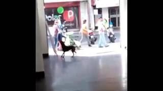 animale caine haios