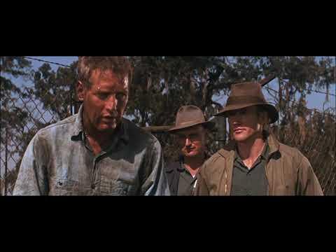 Cool Hand Luke(1967) - Ditch digging