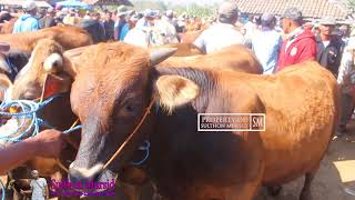 Video Updete Harga Sapi Pegon Idul Adaha 2018 - Pasar Sapi Purwantoro Wonogiri Jawa Tengah MP3, 3GP, MP4, WEBM, AVI, FLV Agustus 2018