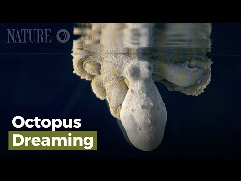 Incredible Nature: Octopus Changes Colors While Dreaming