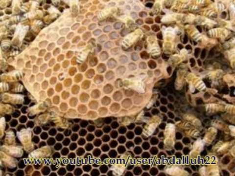 فوائد العسل اليمني